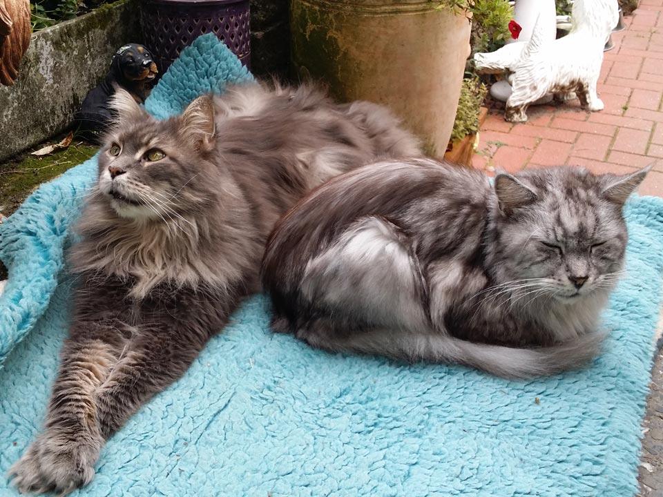 Katze Freigänger