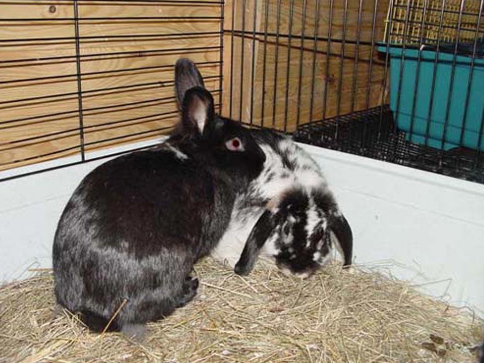 Kleintiere Kaninchen